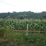 Lantic Corn Farm and Grassland