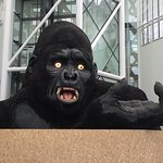 Indrukwekkende gorilla bij de entree