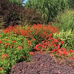 Colour in the September garden