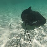 Stingray city. Get up and close to the rays.
