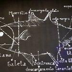 Spezialität: Roter Gadira Thunfisch aus Barbate