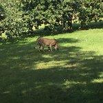 Marwell Zoo Foto