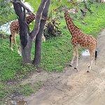 Disney's Animal Kingdom Lodge – fotografia