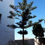 Un joli arbre ? Belle forme.
