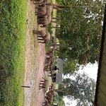 Elephant transit home Udawalawa