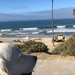 Bentley checking out the waves