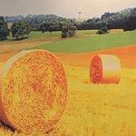 Photo de Trattoria Toscana da Silvano