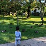 Duck feeding every morning