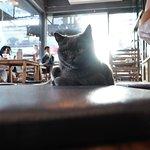 Cat 'n' A Cup Cat Cafe照片