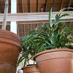 Love the plants inside