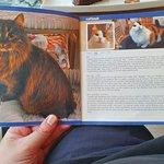 Zdjęcie Cat Cafe Kačių Kavinė