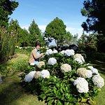 En los bellos jardines de Cajamarca