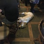 Relaxed Dog in the Pub Area (not allowed in the dining room)