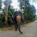 Elephant Care Relief Foundation Foto