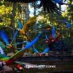 Foto tomada en el Parque de las Aves, ubicado en Foz do Iguaçu.