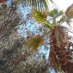 ภาพถ่ายของ Okaliptus