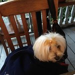 Doggy keeping warm on the porch while we eat