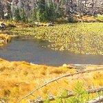Cub Lake Trail照片