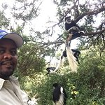 Zdjęcie Trout Tree