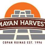 Photo of Mayan Harvest