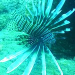 Lionfish.  Come and know more about those spices