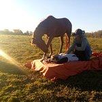 Allegra Horselight - caballos y masajes
