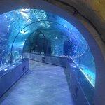 Bandar-e Anzali Aquariums tunnel