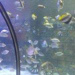 Bandar-e Anzali Aquariums