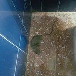 Szczur w hotelu