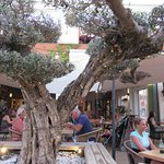 Fotografija – The Olive Tree Mallorca