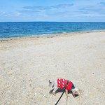 Werribee South Beach: Some rocks on the beach