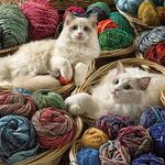 I am an animal lover and yarn hoarder.