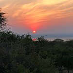 Simba Safaris-billede