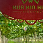 ภาพถ่ายของ Hua Hin Hills Bisto and Wine Cellar