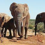 Addo Elephant Park & Kragga Kamma Wildlife Reserve combo Day Visit