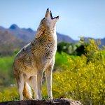 免排隊:一般入場亞利桑那州-索諾拉沙漠博物館門票