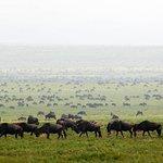 04 dage (Lake Manyara, Serengeti & Ngorongoro Crater)