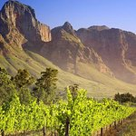 Cape Winelands Guided Private Day Tour from Cape Town