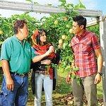 Penang Tropical Fruit Farm with Fruit Tasting