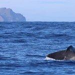 Azores Whale Watching   Observacao Baleias e Golfinhos - Faial Pico