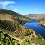 Douro Valley Wine Tour: Visit to Three Vineyards with Wine Tastings and Lunch