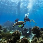Green Island Day Trip from Cairns Including SNUBA or SNUBA Doo Experience