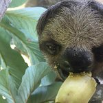 Roatan Shore Excursion: Monkeys, Sloths, and Snorkel Adventure