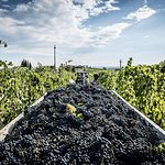 Small Group Tour to Castellina in Chianti, Greve in Chianti and Winery