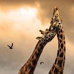 5 Day Tanzania Scenic Luxury Tour