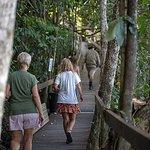 Daintree Rainforest, Cape Tribulation and Rainforest Habitat Wildlife Sanctuary Day Tour