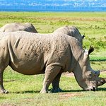 2 Days Lake Nakuru,hell's Gate And Lake Naivasha National Park Safari