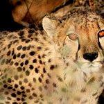 温得和克10日纳米比亚高度导游