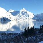 Winter - Wildlife & Turnagain Arm Tour