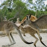 Australia Walkabout Wildlife: Overnight Stay and Wildlife Package